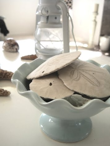 Decorating with Sea Treasures Collected from the Beach