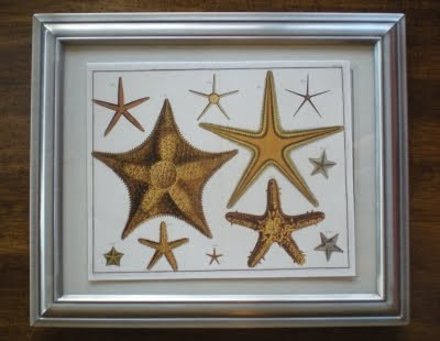 Starfish Prints
