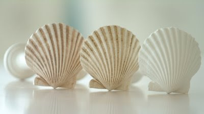 Seashell Inspired Window Treatments Completely Coastal