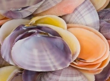 colorful shells photograph
