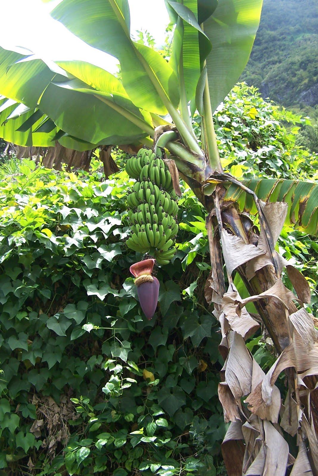 le site bordélique: Photos de plantes à la Réunion