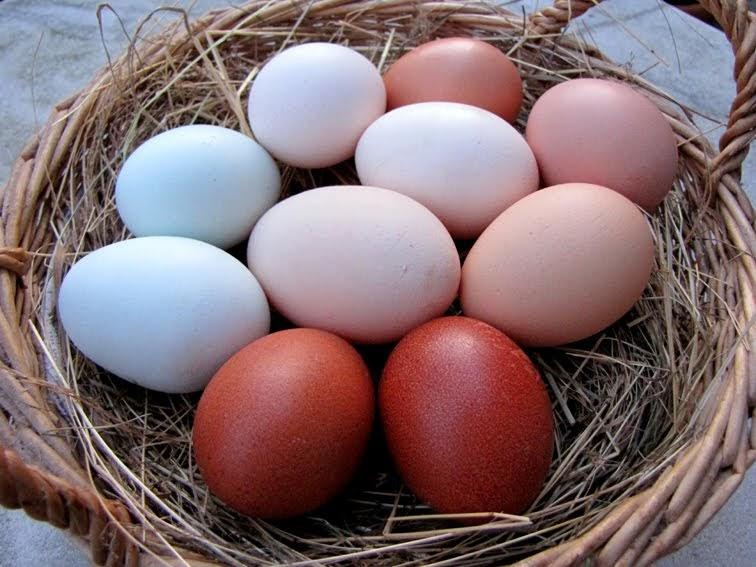 Hühner Eierfarbe