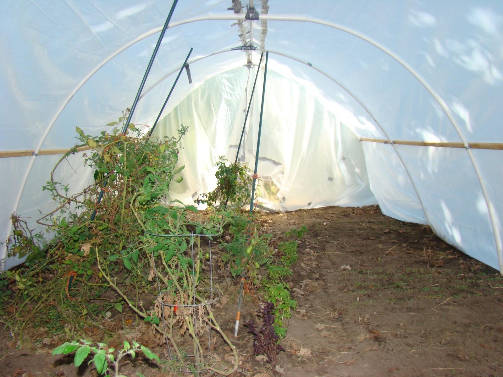 Wishful Acres Farm Blog Building A Backyard Greenhouse