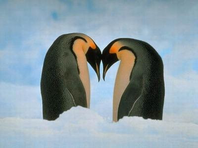 Aninimal Book: The Rediscovered Self: Happy World Penguin Day