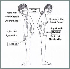 Average age for armpit hair