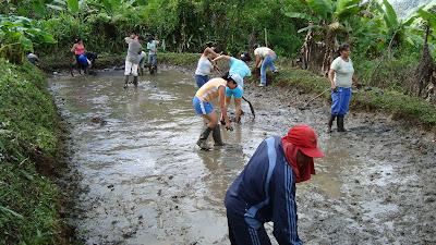 Producci n de tilapia roja 1 competencia adecuar el for Manual de piscicultura tilapia