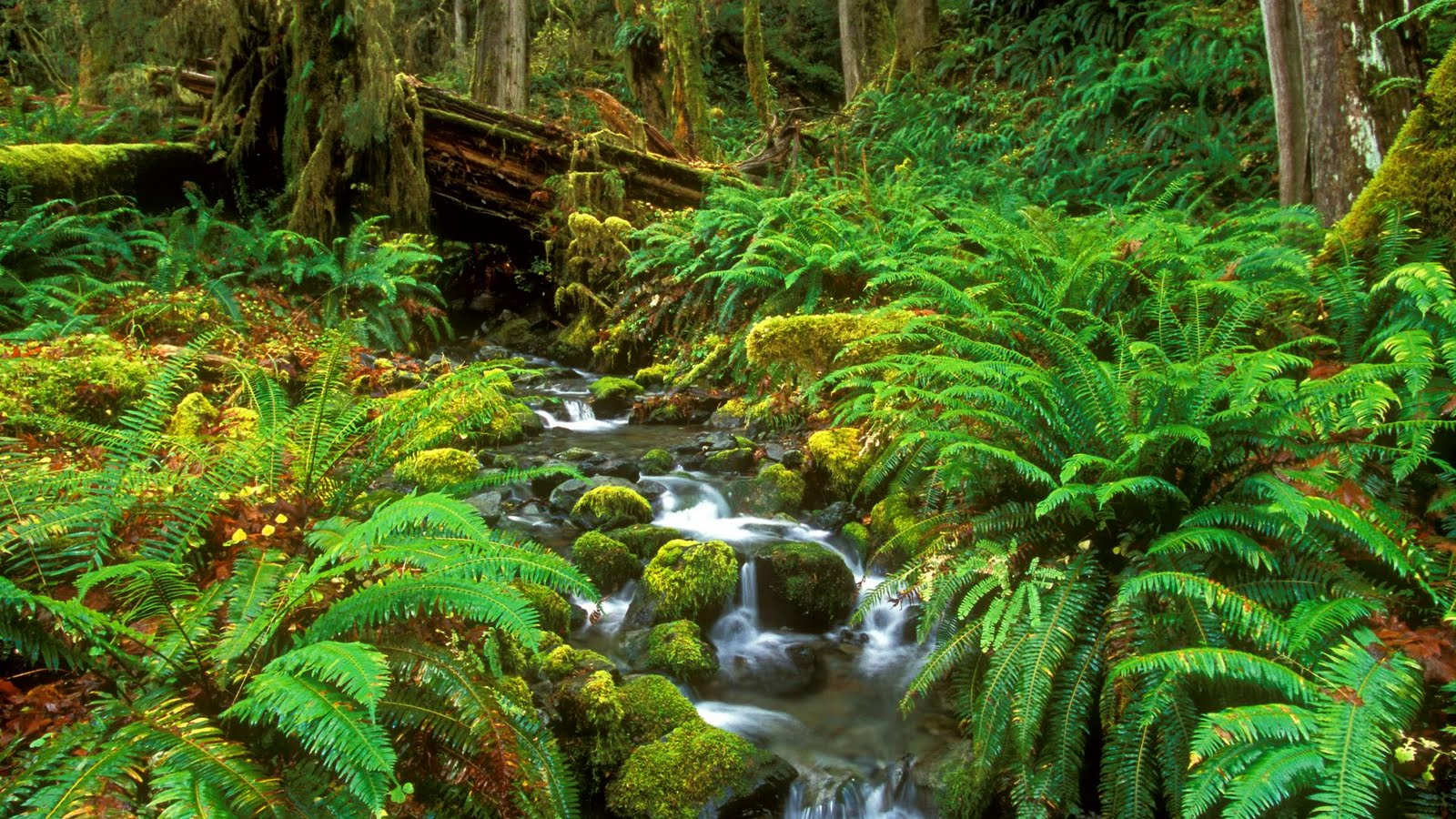 Rahim is here..: Collection of Cool Nature Wallpapers