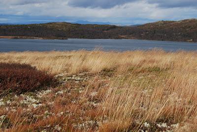 Bilderesultat for høst vind