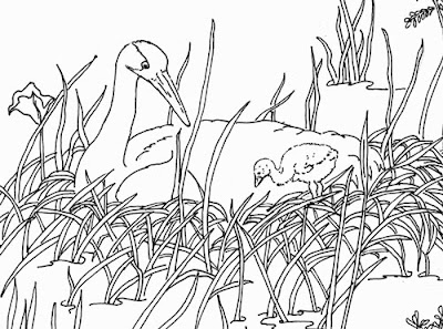 vickie henderson art the whooping crane s imposing will Mississippi Sandhill Crane these are the words of biologist robert allen in his audubon monograph the whooping crane september 30 1950 when this species population numbered less