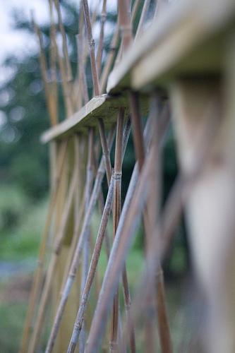 Ewa In The Garden 14 Ideas For Bean Poles Inspirational