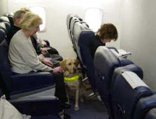 Traveling with a service dog guidelines and for Air travel with dog in cabin