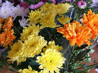 Multi color chrysanthemums