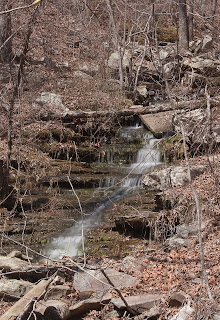 Photograph near Kings Bluff Falls
