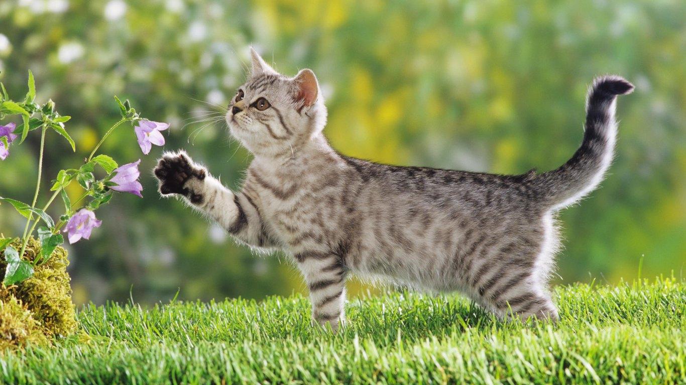 Cute cat wallpaper - Cute kitten wallpaper free download ...