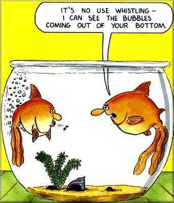 tuesday features funny scuba diving cartoons scuba choice diving news