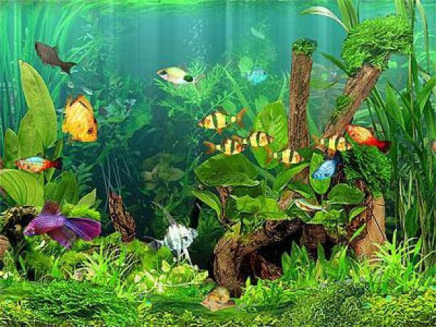 Arowana Fish 3d Live Wallpaper Utilitaires Windows Dream Aquarium Screensaver 1 1770