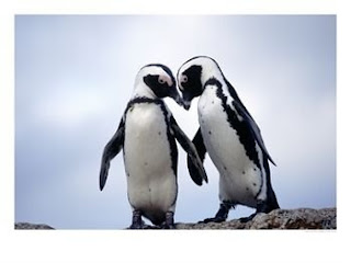 Aninimal Book: With Penguin Love,