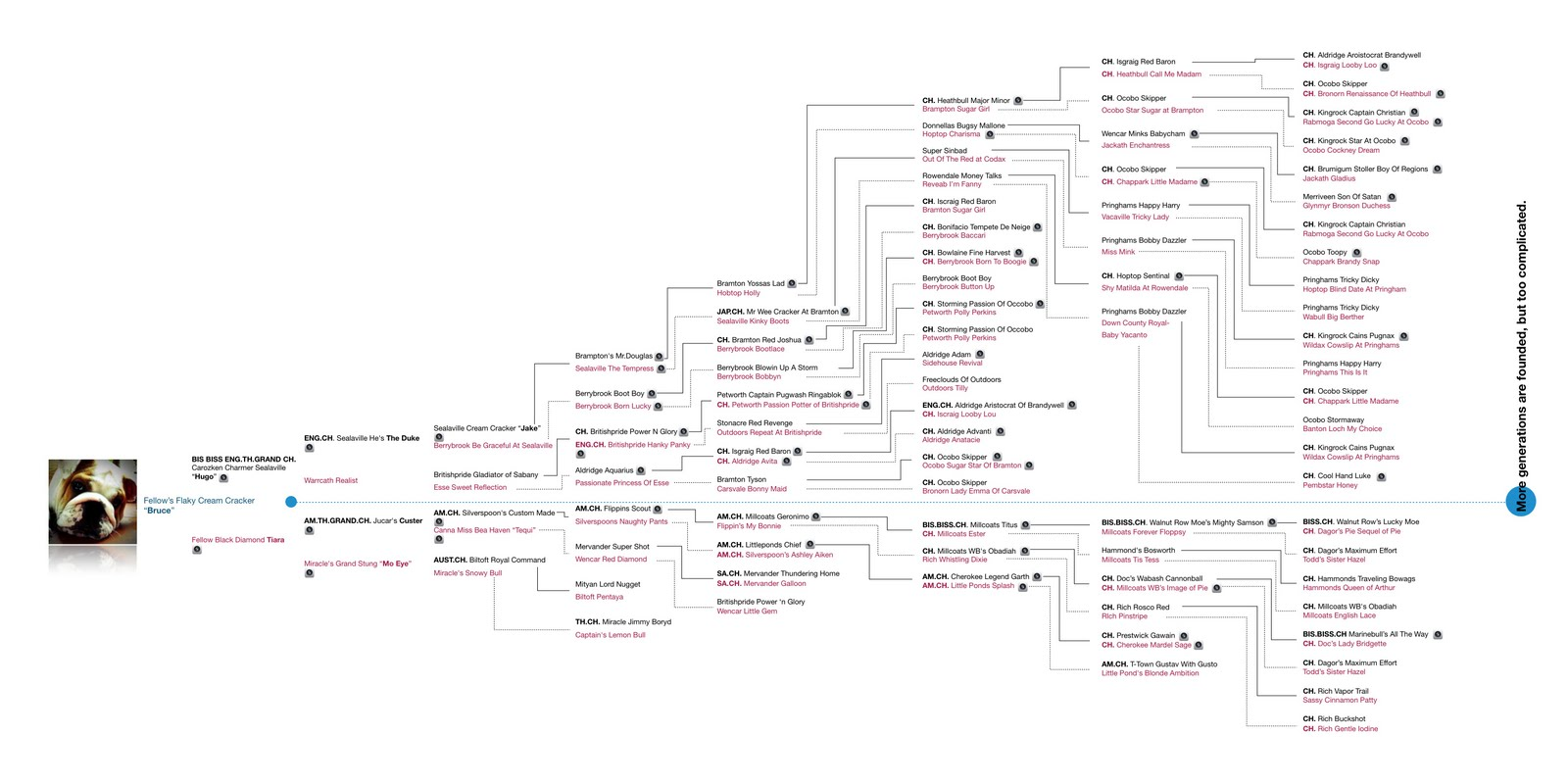 bruce the bulldog bruce s family tree