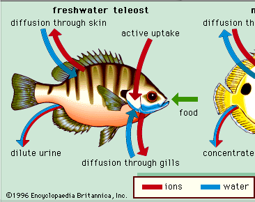Image result for external environment of fish