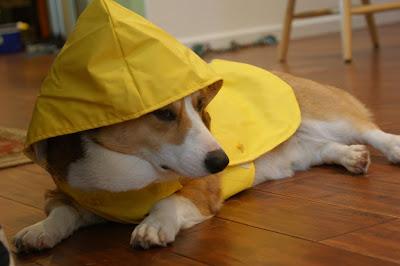 https://i0.wp.com/3.bp.blogspot.com/_rdEuGEMgYOI/S2h4SVQXP4I/AAAAAAAACS8/uQ2P4ZEiLoE/s400/theo+in+raincoat.jpg?resize=200%2C133
