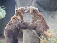 Bears wrestling at Riverbanks Zoo