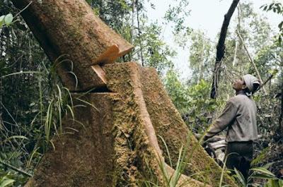 https://i2.wp.com/3.bp.blogspot.com/_rku6deQBORg/S4OfTZKsGkI/AAAAAAAAMj4/fVSVxYAk_As/s400/tree%2B-%2Bdeforestation.jpg