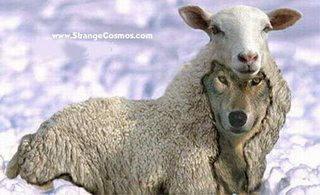 misionaris serigala berbulu domba