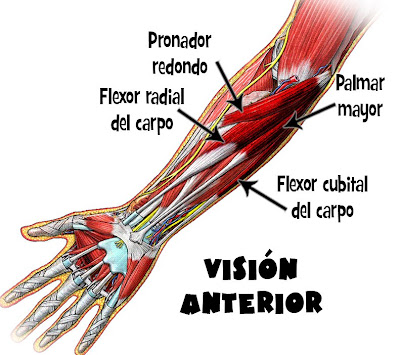 Las ventajas de Dolor lumbar derecho