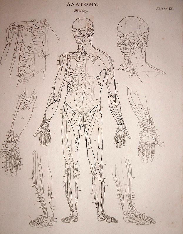 How To Draw The Human Anatomy