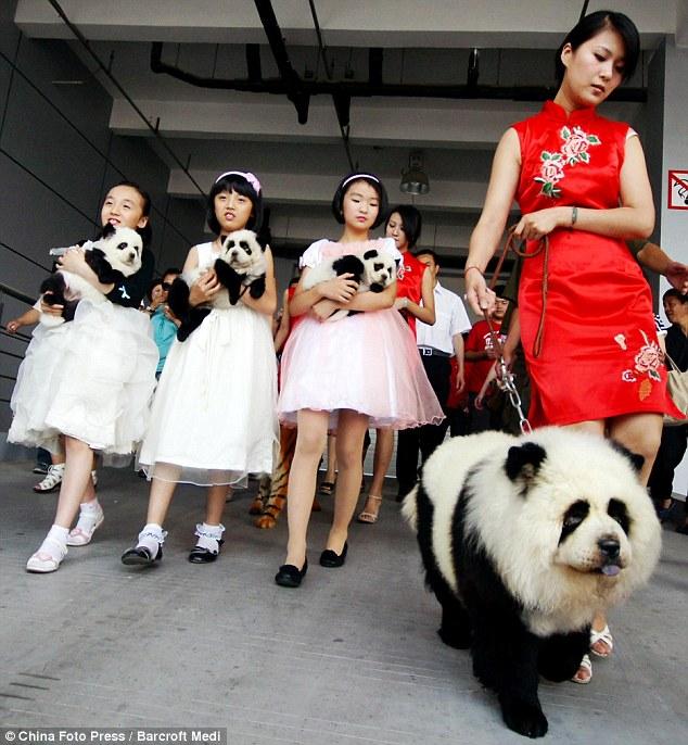 parentesco a panda