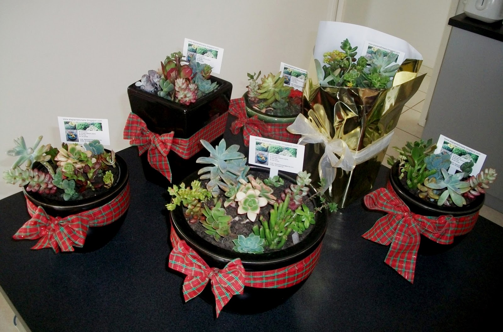 Al's Plants For Sale: Christmas Gift Pots