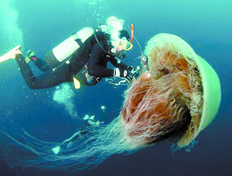 ysmenghuan: Jellyfish ...