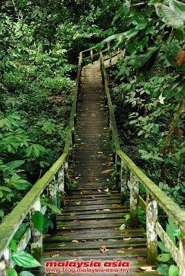 Gomantong Caves Walkway
