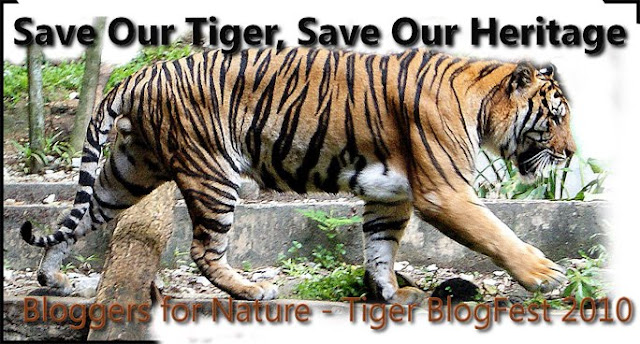 Malaysian Tiger Campaign