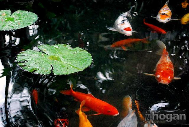 Japanese Botanical Garden at Berjaya Hills Resort