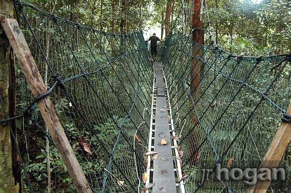 Sarawak Canopy Walk