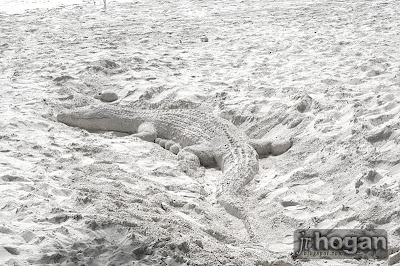 Crocodile at Beach