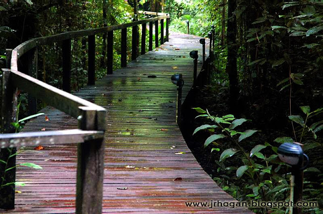 Walkway at the Mulu National Park