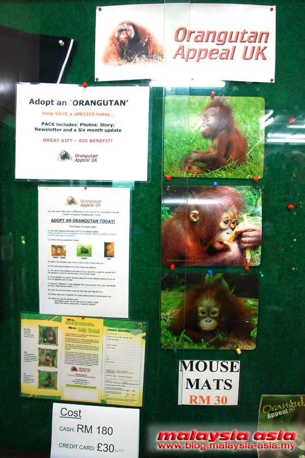 Sepilok Orangutan Appeal UK