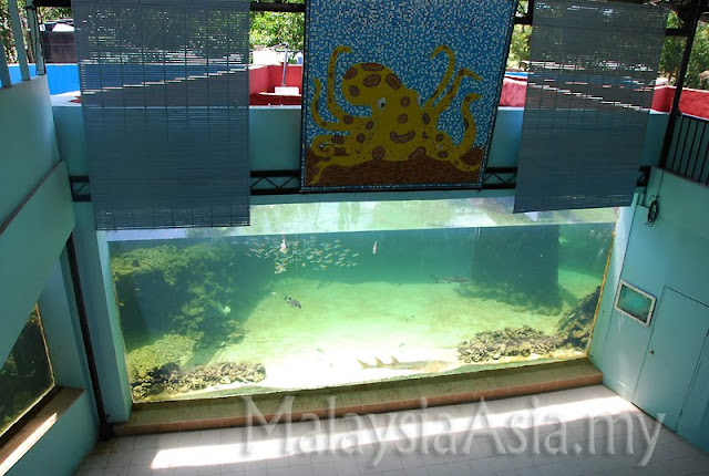 Aquarium at Green Connection Sabah