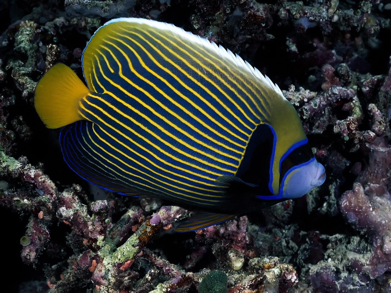 colorful fish - photo #30