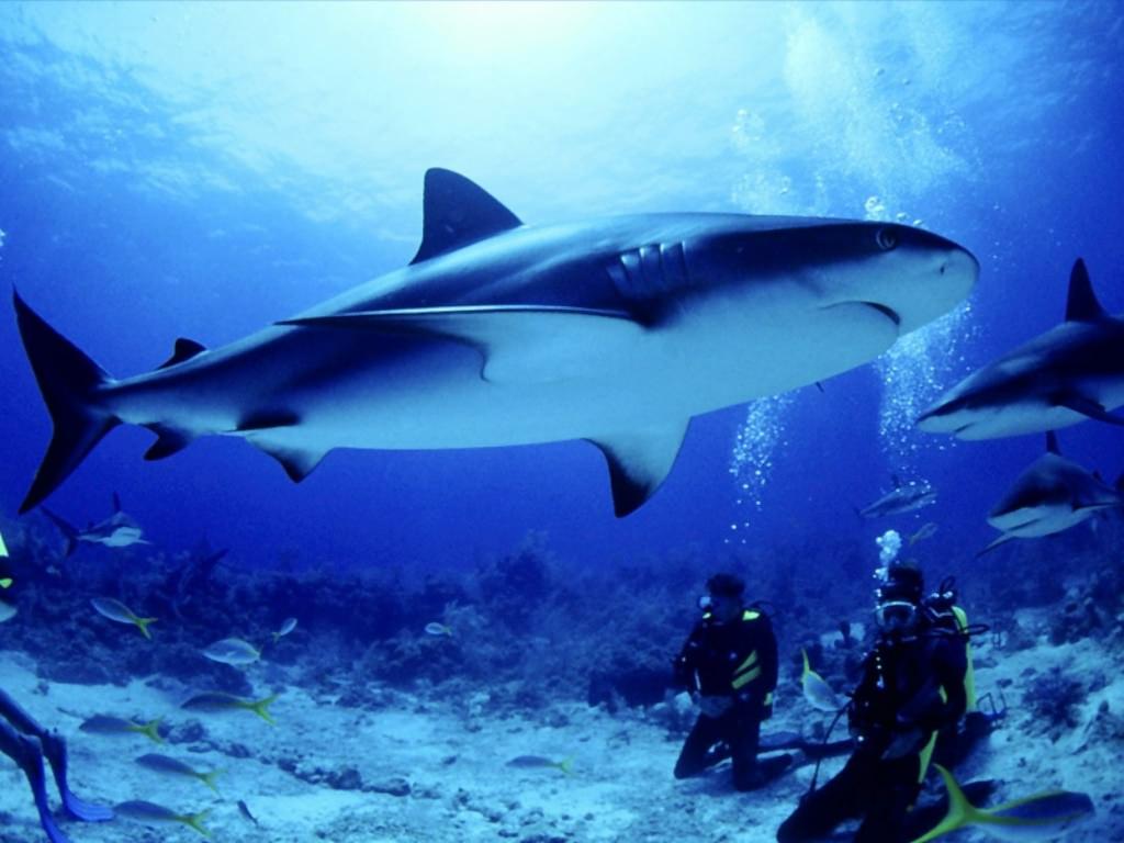 download wallpaper shark 1600 - photo #26