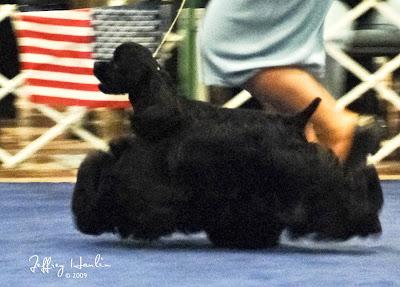 DOG SHOW POOP: 2010-01-10