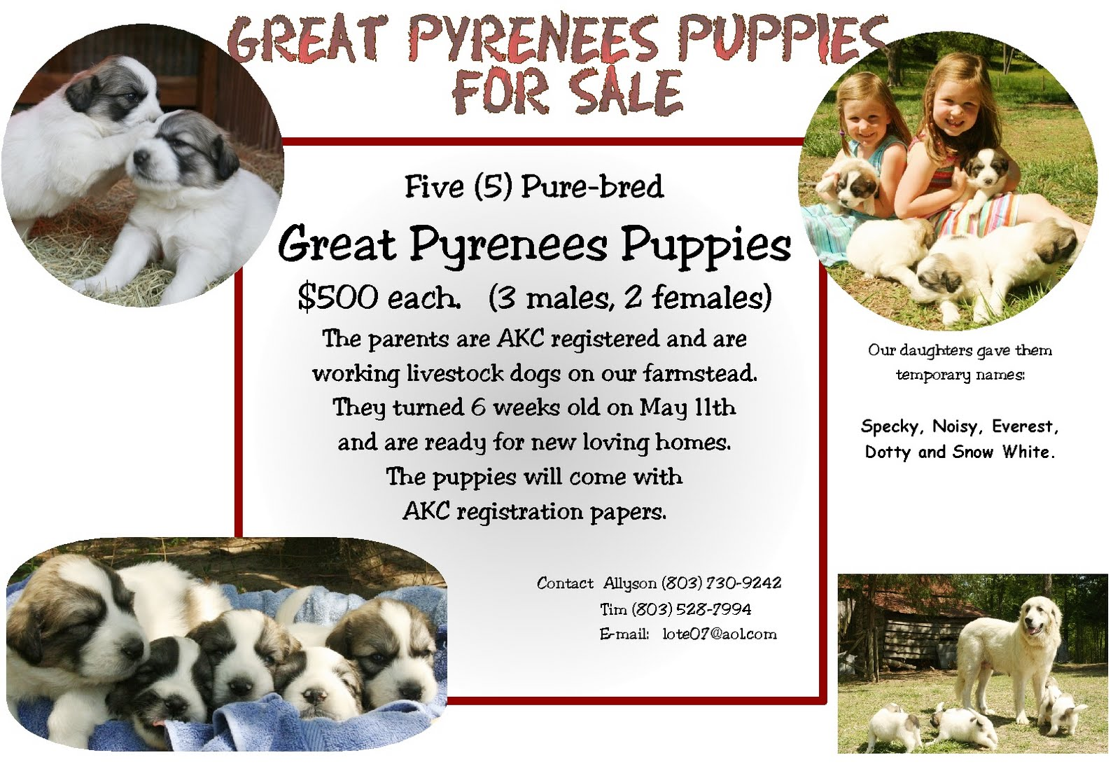 puppy for sale flyer templates - till we get there puppies for sale