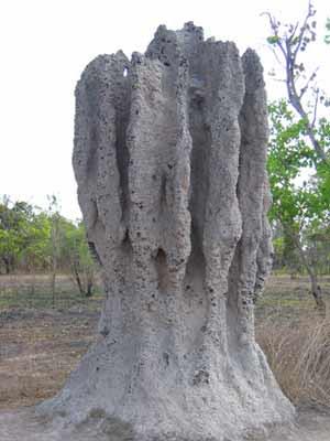 Mound Activity Termite Mound