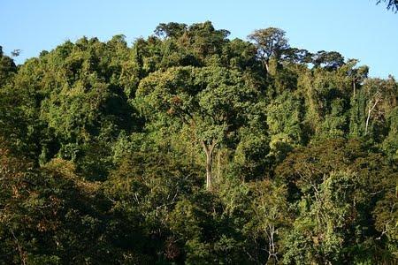 Floresta Nacional de Rio Preto | Espírito Santo