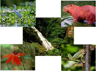 Ecologia Geral - Conceitos Gerais de Ecologia
