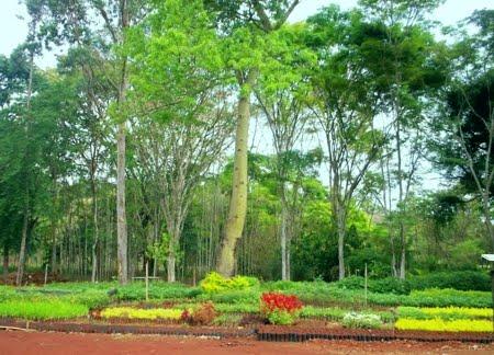 Floresta Nacional de Ritápolis | Minas Gerais
