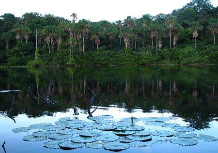 Floresta Estadual do Amapá | Amapá