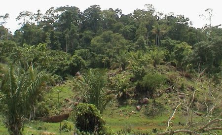Parque Estadual Serra dos Reis   Rondônia